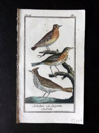 Buffon 1785 Antque Hand Colored Bird Print. Crested Lark 9-2